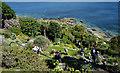 SW5129 : Gardens, St. Michael's Mount by habiloid