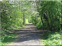 NZ3472 : Path near Churchill Playing Fields, Monkseaton by Geoff Holland
