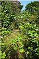 SX8965 : Overgrown path to Queensway by Derek Harper