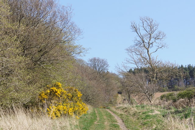 Old Roman road, Cappuck