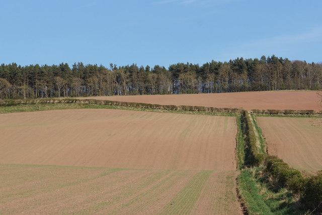 Fields at Cappuck