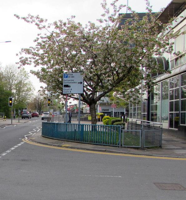 April blossom, Glyndwr Road, Cwmbran