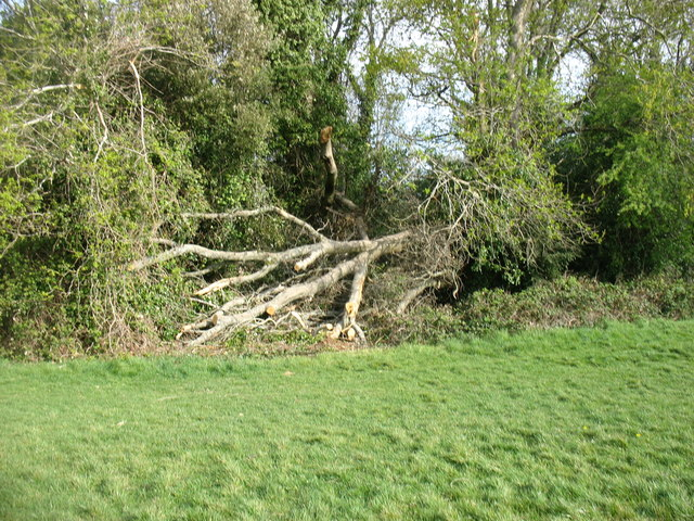 Fallen tree beside Clifton Downs