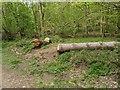 TF0821 : Fallen Scots Pine by Bob Harvey