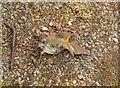 SX9065 : Dead robin, Torre by Derek Harper