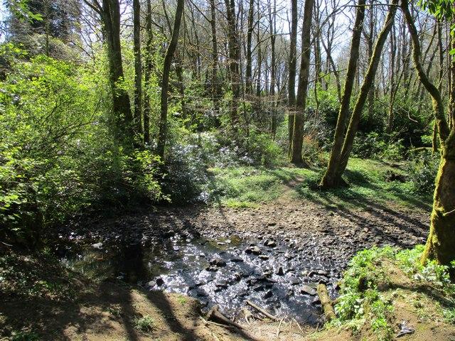 Woodland path, Blackwood Estate