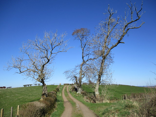 Gnarled trees by Laigh Netherfield track