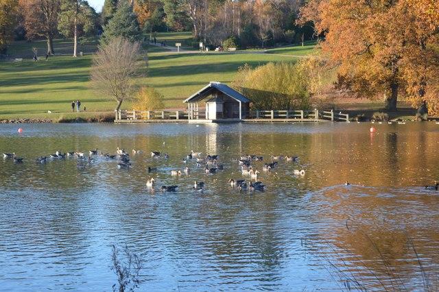 Ducks, Dunorlan Lake by N Chadwick