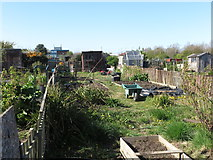NZ3472 : Allotments near Langdale, Monkseaton by Geoff Holland
