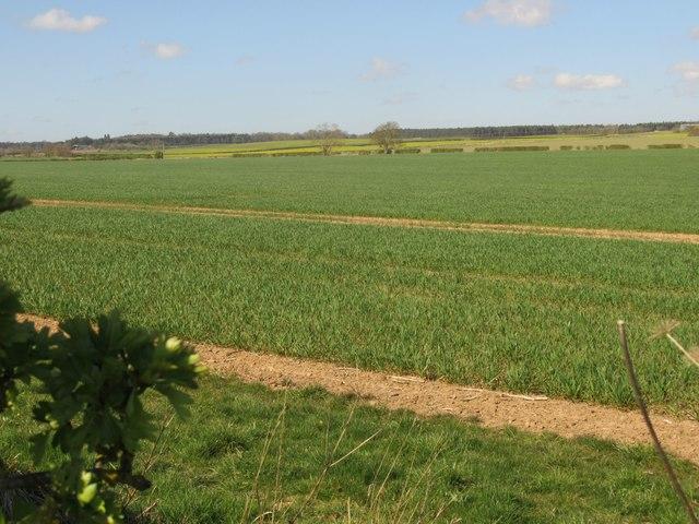 Trees on crop field margin near Hunthall