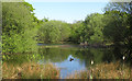 TQ3994 : Pond near Queen's Hunting Lodge, Epping Forest by Roger Jones