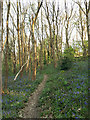 SE2535 : Path through bluebell woods below the Broadlea estate by Stephen Craven