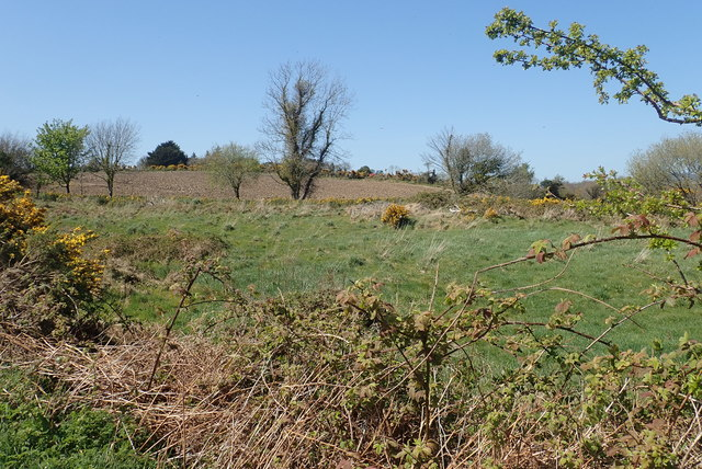 Rough pasture on the north side of Wild Forest Lane