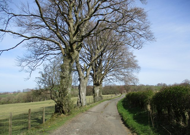 Trees by the road to Tweediehall