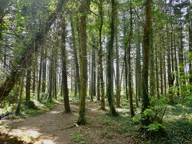 Tipperary Wood - an ancient woodland