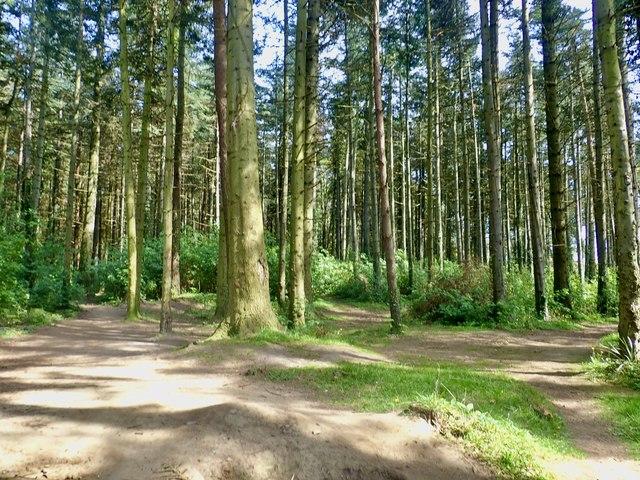 Paths through Tipperary Wood