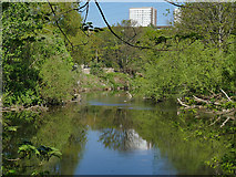 SE2635 : Kirkstall Valley Nature Reserve: river branches by Stephen Craven