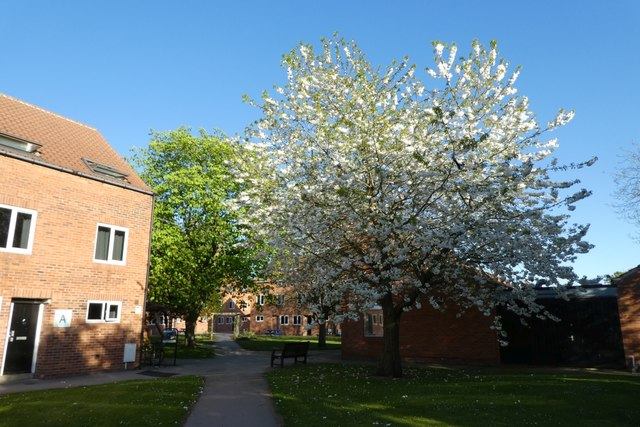 Blossom in St. Lawrence Court