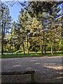 TF0720 : Car park with Pines by Bob Harvey