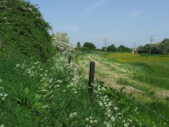 Footpath And Meadow