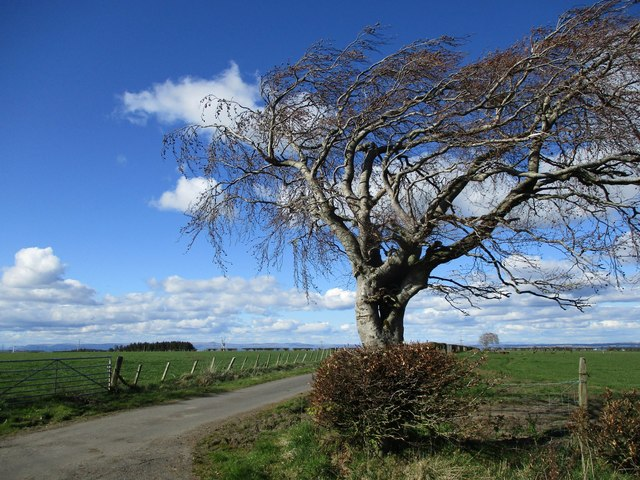 Lone tree by the Heads road
