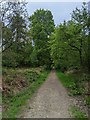 TF0820 : Forest track by Bob Harvey