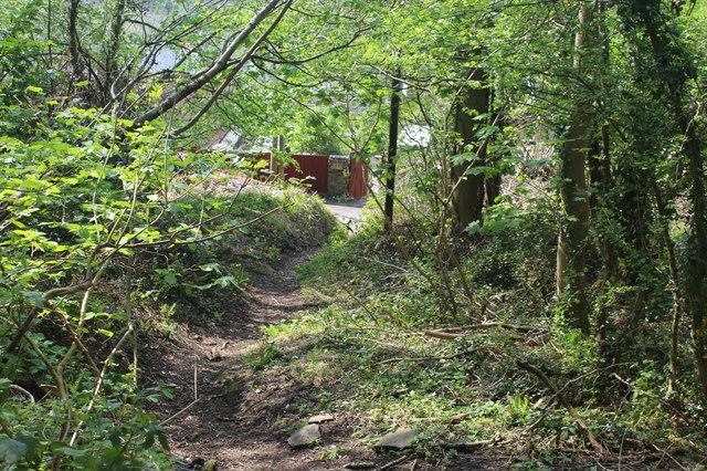 Woodland footpath down to The Rhiw