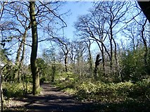 TQ3472 : Early spring in Dulwich Wood by Brian Whittle