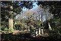 NJ8715 : Gnarled tree, St Meddan's kirkyard by Bill Harrison