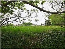 SO9095 : Cricket Club View by Gordon Griffiths