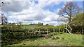 NZ1037 : Unusual hedge crossing by public footpath by Trevor Littlewood