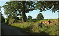 SO5377 : Roadside trees near Middleton Chapel by Derek Harper