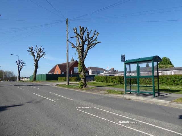 Pollarded trees, Pinehurst Road