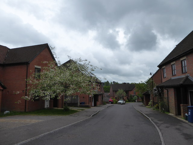 A blossoming tree in Kiln Avenue