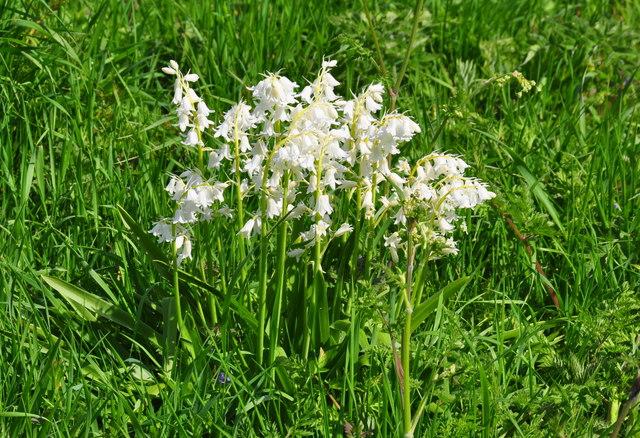 Whitebells, Littleton Drew Lane, Acton Turville, Gloucestershire 2020