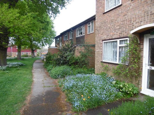 Trees and Flowers in Westrick Walk, Prestwood