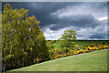 NZ0739 : Trees in new leaf, with gorse bushes by Trevor Littlewood