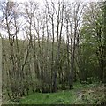 NS8044 : Hazel coppice in the Nethan Gorge by Alan O'Dowd