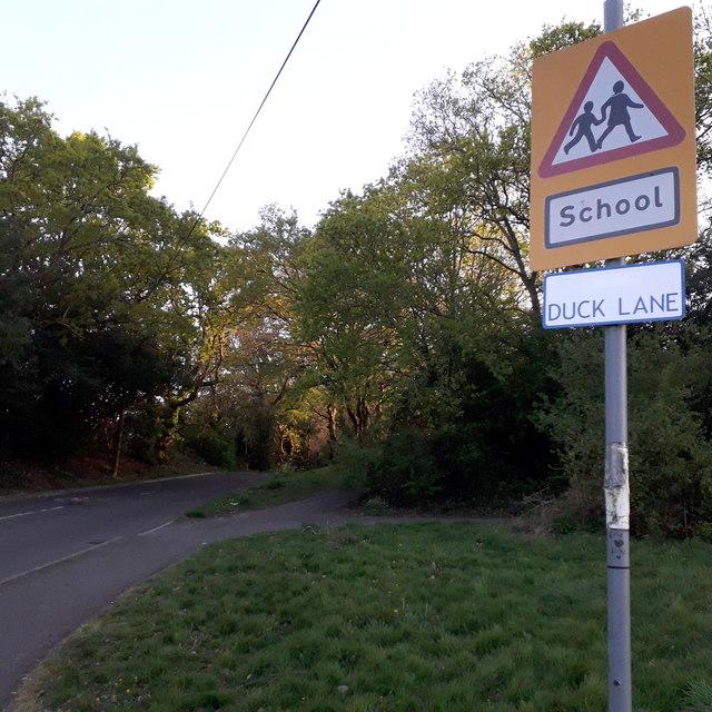 Bear Cross: Duck Lane