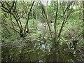 SE3520 : Carr, Ashfields, Southern Washlands nature corridor by Christine Johnstone