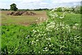 SO8542 : Cow parsley and a muck bury by Philip Halling