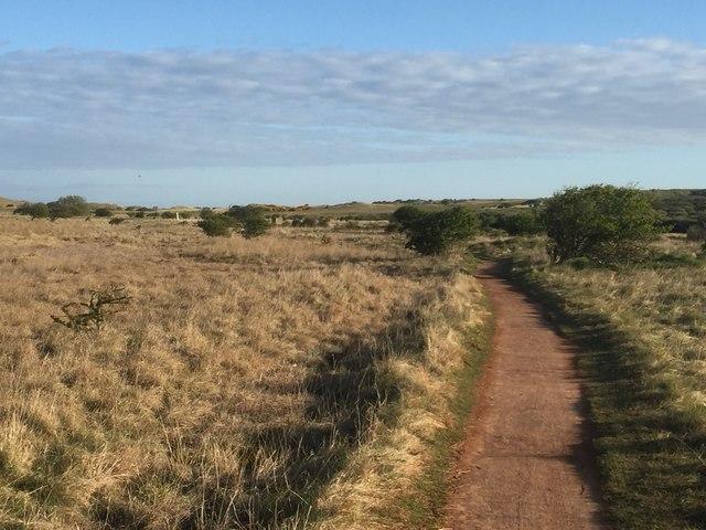 Path, Yellow Mires