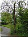 SU7524 : Sewer vent pipe on School Lane, Sheet by Martyn Pattison