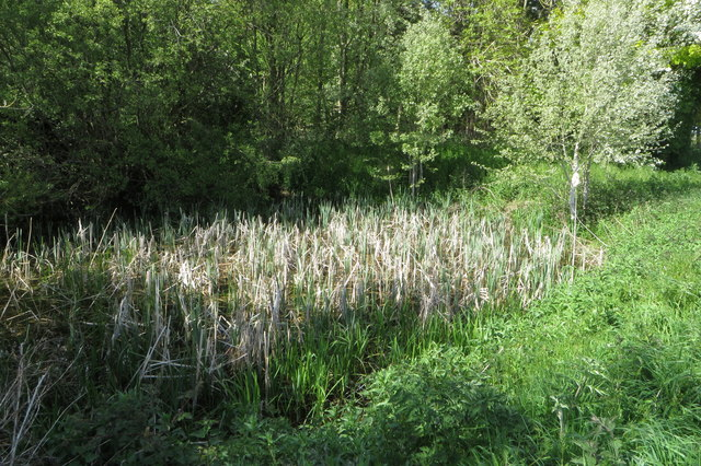 Pond by Brandon's Wood