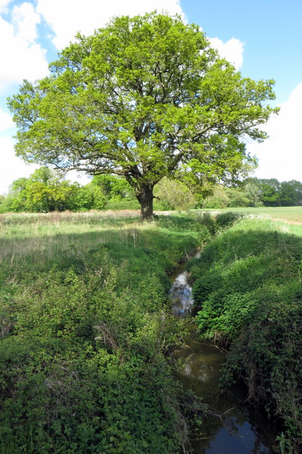 Tree by the stream