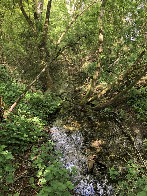 Moat in the wood