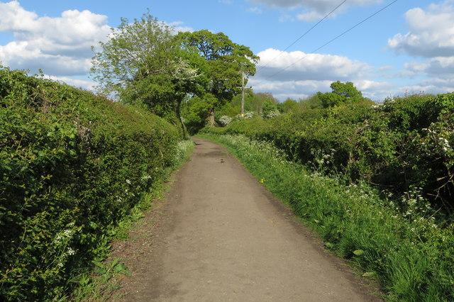 Lane by Gumbrill's Farm