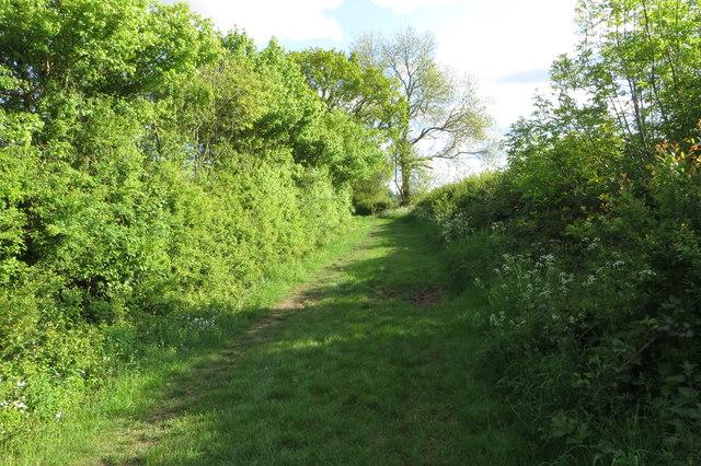 Bridleway heading for North Crawley