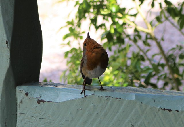 Cheeky little chappie!