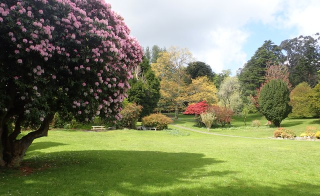 Flowering trees in the Arbouretum at Tollymore Forest Park
